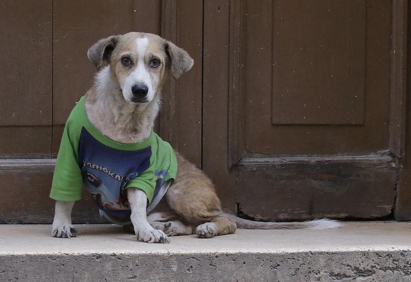 Dog in Old Havanna Ascanio_Cuba 199A6920
