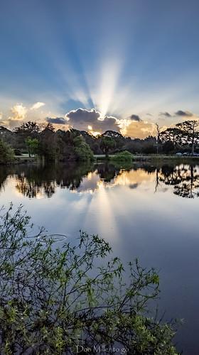 pixelxl sunrise venicerookery nature onawalk reflections outdoors googlepixel lake rookery florida venice unitedstatesofamerica us