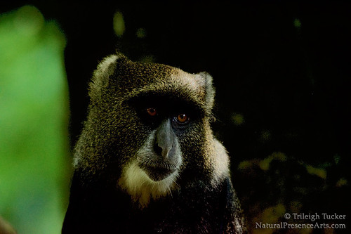Blue Monkey | by Trileigh