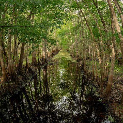 Black Bear Wilderness Area 2   by Ed Rosack