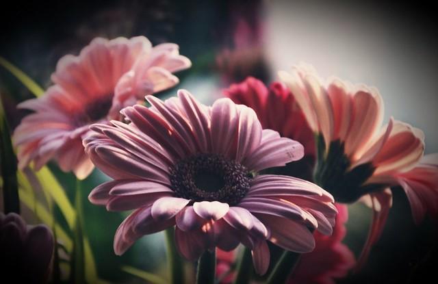 Blütentraum....