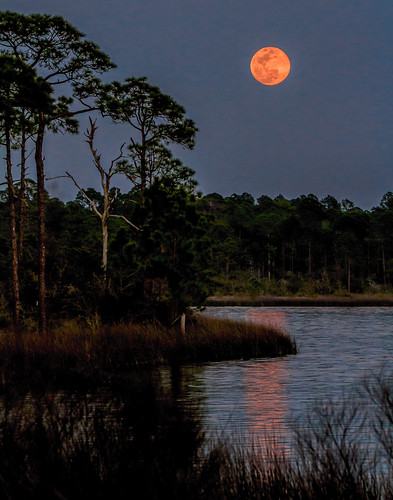 Full Worm Moon @ Wild Heron | by C.Fredrickson Photography