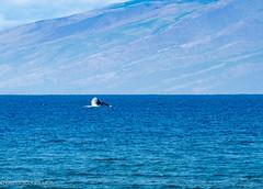 mahana surf-67.jpg