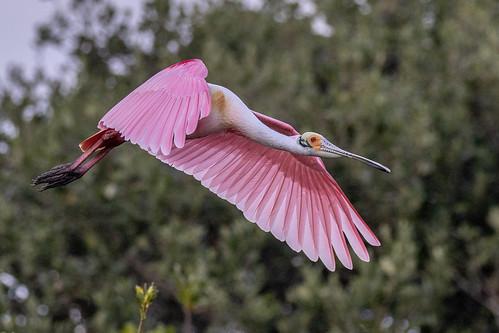 outdoor seaside nature wildlife 7dm2 bird heron egret