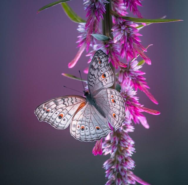 Butterflies are self propelled flowers.