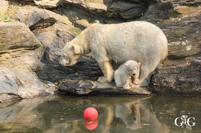 Besuch Tierpark Friedrichsfelde 06.04.201994