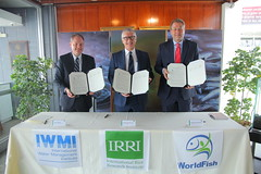 IRRI, WorldFish, and IWMI commit to a food system transformation in Southeast Asia. Photo by  Isagani Serrano, IRRI