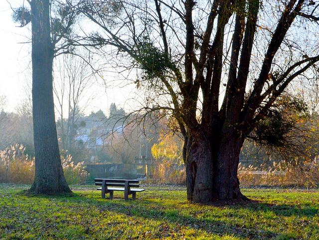 Autumnal serenity