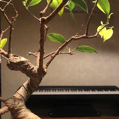 Composizione Bonsai su Keyboard