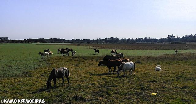marisma de El Rocio, Almonte, Huelva