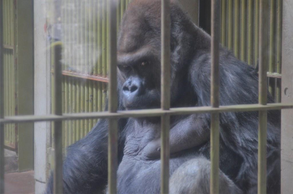 八木山動物公園(仙台市)20190210