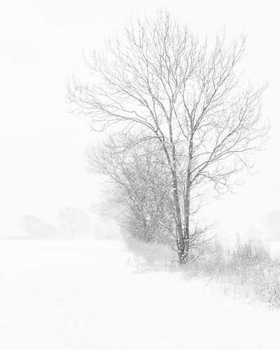 Snow Tree | by framcameraclub