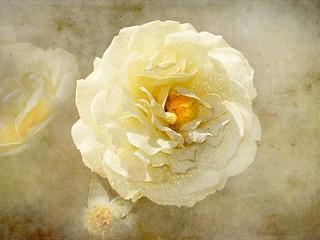 Her face it bloomed like a sweet flower
