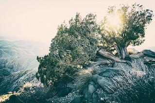 Joshua tree - tree valley | by jordan.dickinson.and