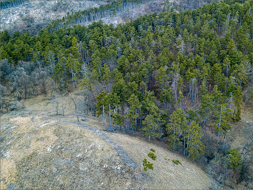 aerial aerialphotography landscape forest trees