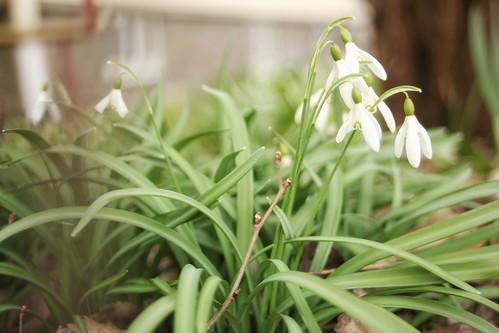 senaste nytt: våren är här | by rosettflickan
