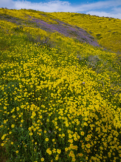 Superbloom | by snackronym