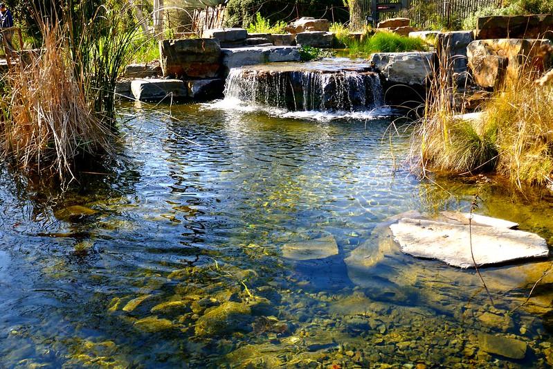 Pond, Exposition Park, LA