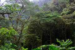 Mashpi Ecological Reserve. Mashpi Reserva Ecológica