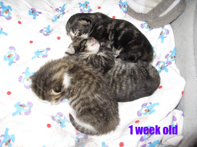 Sarah and kitties