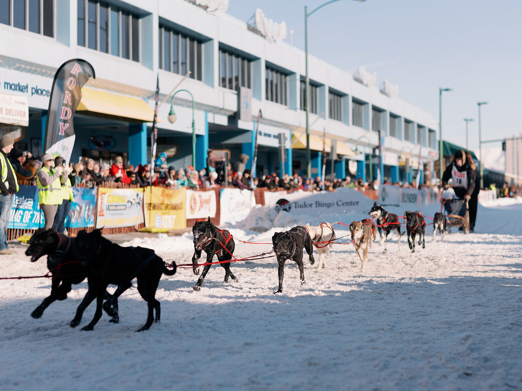 Open World Championship Sled Dog Races. Fur Rondy 2019