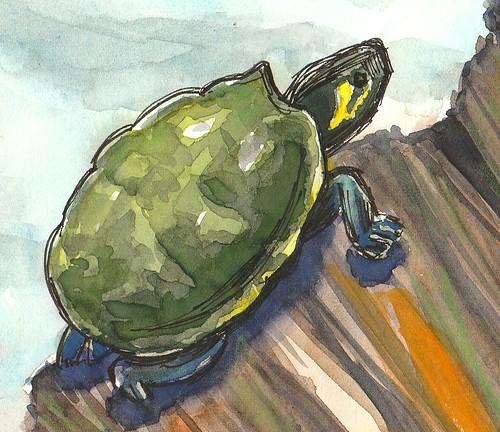 20190407_turtle_close_up