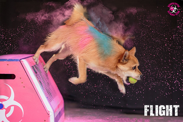 Holi Flyball Flight