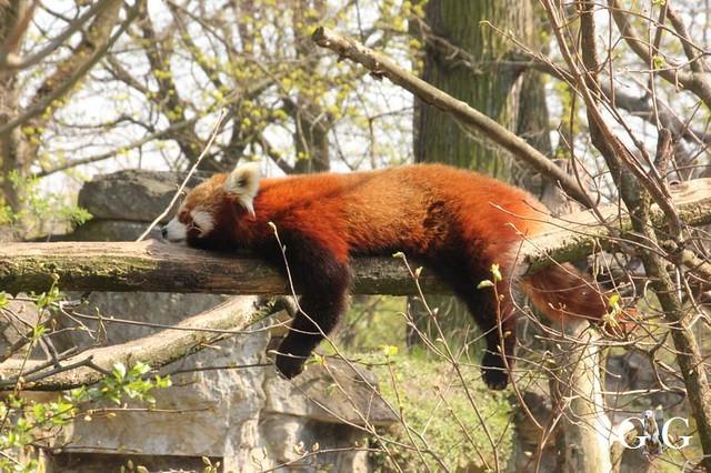 Besuch Tierpark Friedrichsfelde 06.04.2019124