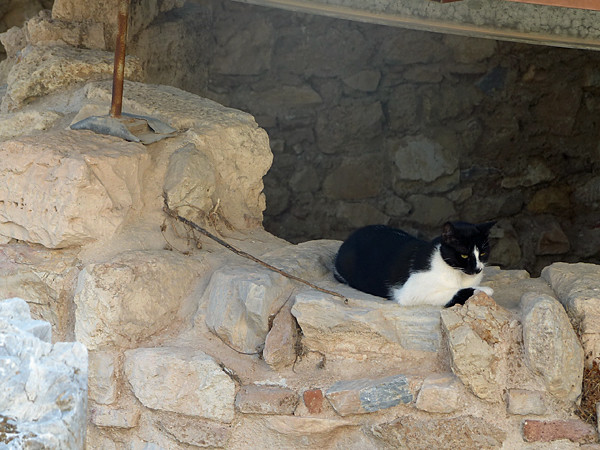 chat des ruines