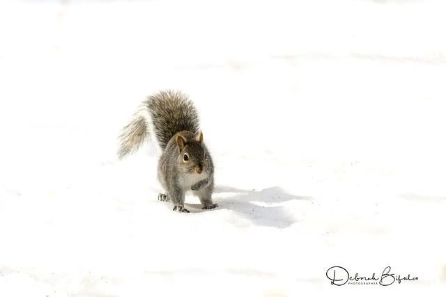 Dashing through the snow.  (Explored)