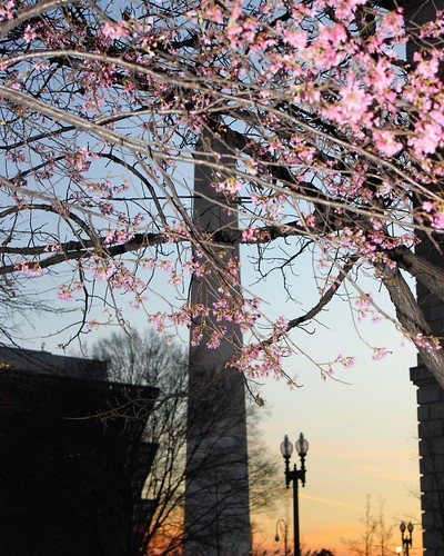 Blooming at Federal Triangle | by jimhavard