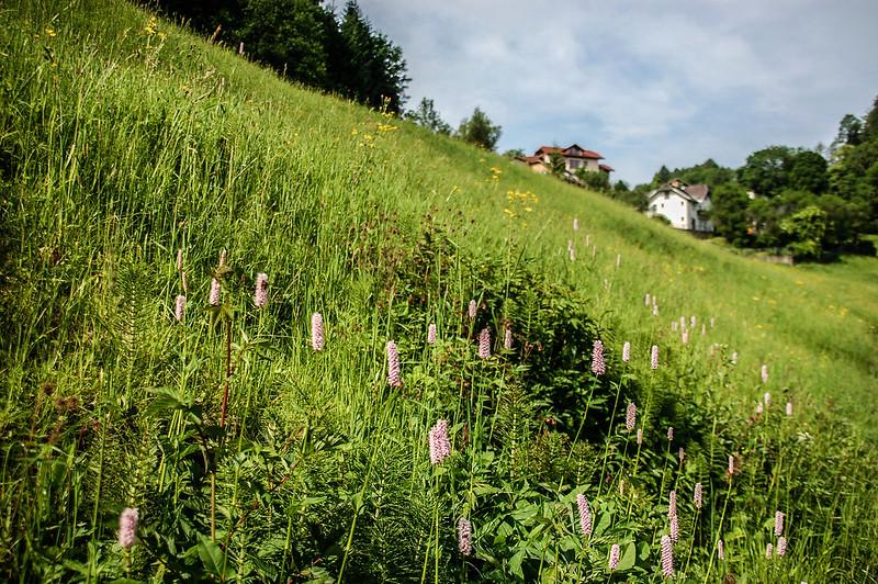 Bad Dürrnberg 2
