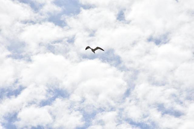 Gaviota y nubes