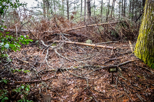 Tall Pines Preserve and South Saluda Church Cemetery-35 | by RandomConnections