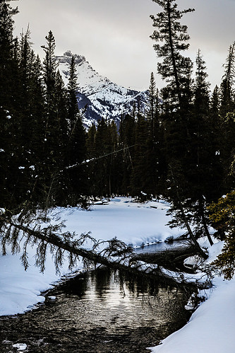 wyoming beartoothplateau clarksforkoftheyellowstone clarksfork clarksforkvalley lodgepolepines beartoothhighway usroute212 chiefjosephhighway glacialvalley winter snow clouds sky evening eventide river fallentree tree indexpeak absarokamountains wyojones np