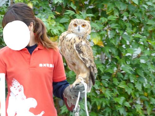 掛川 花鳥園 フクロウ バードショーやイベント