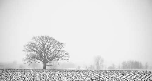 simple country rural farm feild proud lonely lone tree snow storm snowstorm canada ontario napanee greater greaternapanee cdn cans2s landscape winter