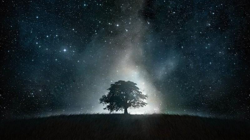 Обои дерево, абстракция, свет, ночь картинки на рабочий стол, фото скачать бесплатно
