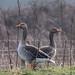 Lunt Meadow Feb 19 by m@k109