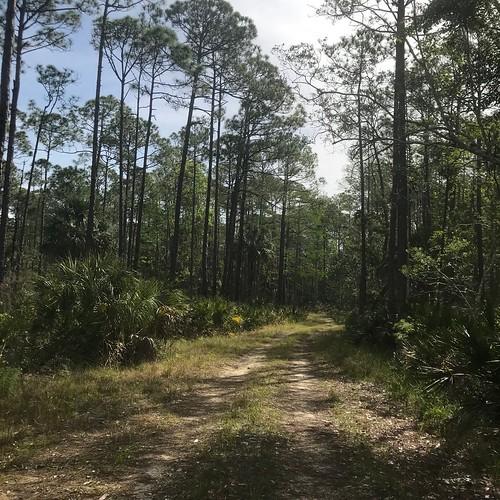 park nature gulfcoast florida landscape weekiwacheepreserve