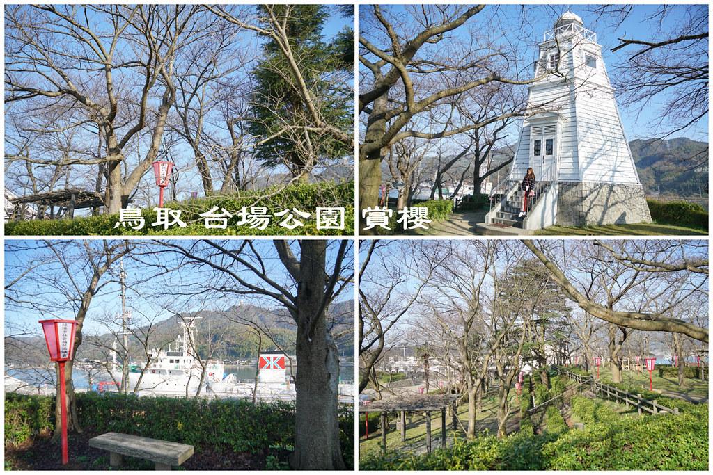 台場公園 櫻花名所