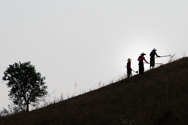 Birmanie: travaux des champs.