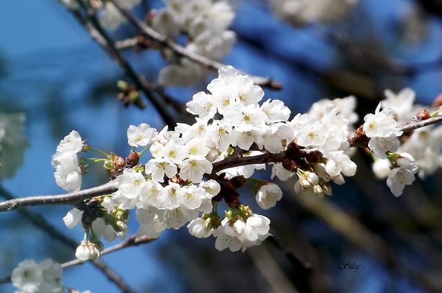 Una flor florece para su propia alegría. -Oscar Wilde.