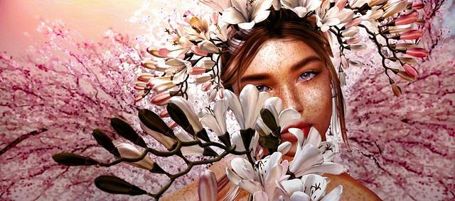 ... cherry blossom ... #PryceBloomofSpringCampaign