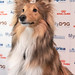 Göteborgs Charmigaste Hund 2019