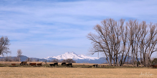 march april spring sprinttime seasons farms farming agriculture cows cattle longmont nature landscapes ranches coloradolandscapes bouldercounty jamesboinsogna photography