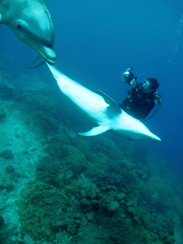 Curacao 2009-2010 Diving Disk 1 1538