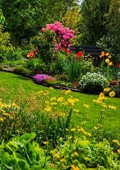 Landschaft - Blumen �berf�lltes Biotop