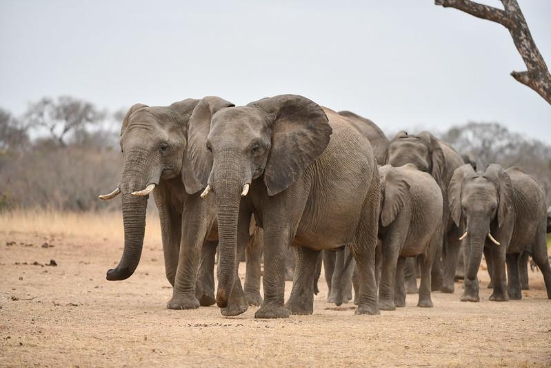 2256 Elephant
