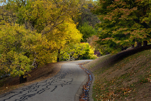 adelaide mountloftybotanics adelaidehills autumn